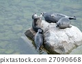 The Baikal seal nerpa 27090668