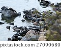 The Baikal seal nerpa 27090680