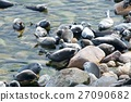 The Baikal seal nerpa 27090682