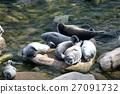 The Baikal seal nerpa 27091732