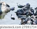 The Baikal seal nerpa 27091734