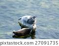 The Baikal seal nerpa 27091735
