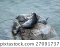 The Baikal seal nerpa 27091737
