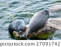 The Baikal seal nerpa 27091742