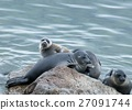The Baikal seal nerpa 27091744