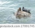 The Baikal seal nerpa 27091745