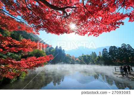 秋天Yufuin蒸早晨金標度和秋葉 27093085