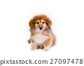 corgi fluffy puppy portrait 27097478