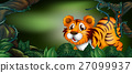 Wild tiger in the forest 27099937