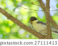 大山雀 山雀 野生鳥類 27111413