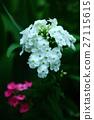 流动的白色和粉红色的花朵 27115615