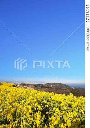 Awajishima Spring Landscape Rape flower field Bloom 27118146