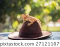动物 帽子 鬣蜥蜴 27121107