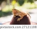 动物 帽子 鬣蜥蜴 27121108