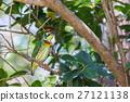 avian, bird, feed 27121138