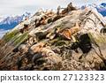 Sea lions on isla in  beagle channel near Ushuaia 27123323
