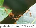 Ant bridge unity team 27125573