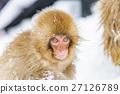 猴子 猴 日本獼猴 27126789