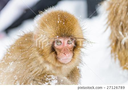 나가노 _ 온천에 들어가는 아이 원숭이 27126789