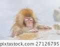 나가노 _ 온천에 들어가는 아이 원숭이 27126795