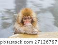 猴子 猴 日本獼猴 27126797