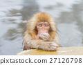 猴子 猴 日本獼猴 27126798