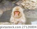 สปา,ลิง,สัตว์ 27126804