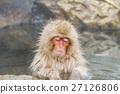 나가노 _ 온천에 들어가는 원숭이 27126806
