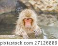 猴子 猴 日本獼猴 27126889