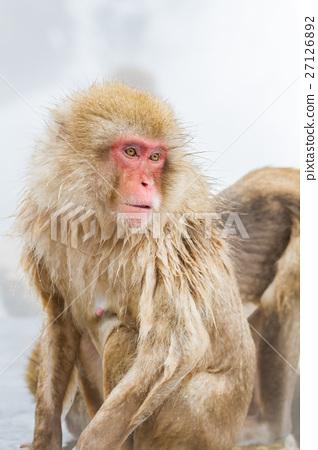 나가노 _ 온천에 들어가는 원숭이 27126892
