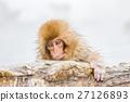 猴子 猴 日本獼猴 27126893