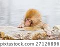 나가노 _ 온천에 들어가는 아이 원숭이 27126896