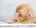 나가노 _ 온천에 들어가는 아이 원숭이 27126899