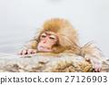 猴子 猴 日本獼猴 27126903
