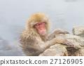 猴子 猴 日本獼猴 27126905
