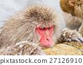 猴子 猴 日本獼猴 27126910