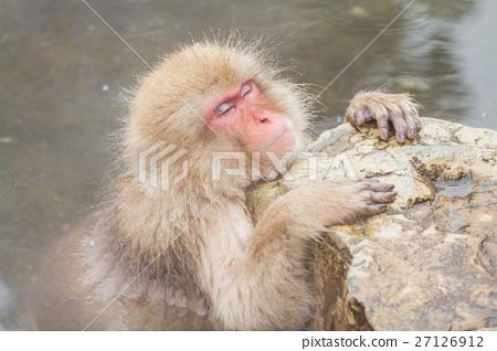나가노 _ 온천에 들어가는 원숭이 27126912