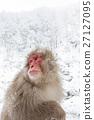 나가노 _ 온천에 들어가는 원숭이 27127095