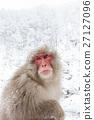 나가노 _ 온천에 들어가는 원숭이 27127096