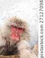 猴子 猴 日本獼猴 27127098