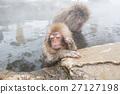 나가노 _ 온천에 들어가는 아이 원숭이 27127198