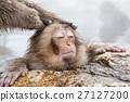 나가노 _ 온천에 들어가는 아이 원숭이 27127200