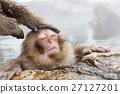 나가노 _ 온천에 들어가는 아이 원숭이 27127201