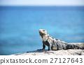 鬣蜥蜴 拉丁美洲 海濱度假村 27127643