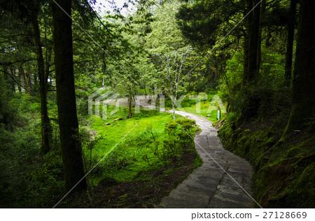 阿里山森林小徑 27128669