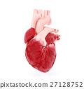 Medical illustration of a human heart 27128752