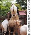 在岩手縣盛岡市動物園的綿羊和山羊2 27144300