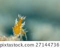 海参 水下照片 海底的 27144736
