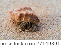 hermit crab on the beach 27149891