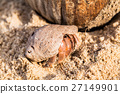 hermit crab on the beach 27149901